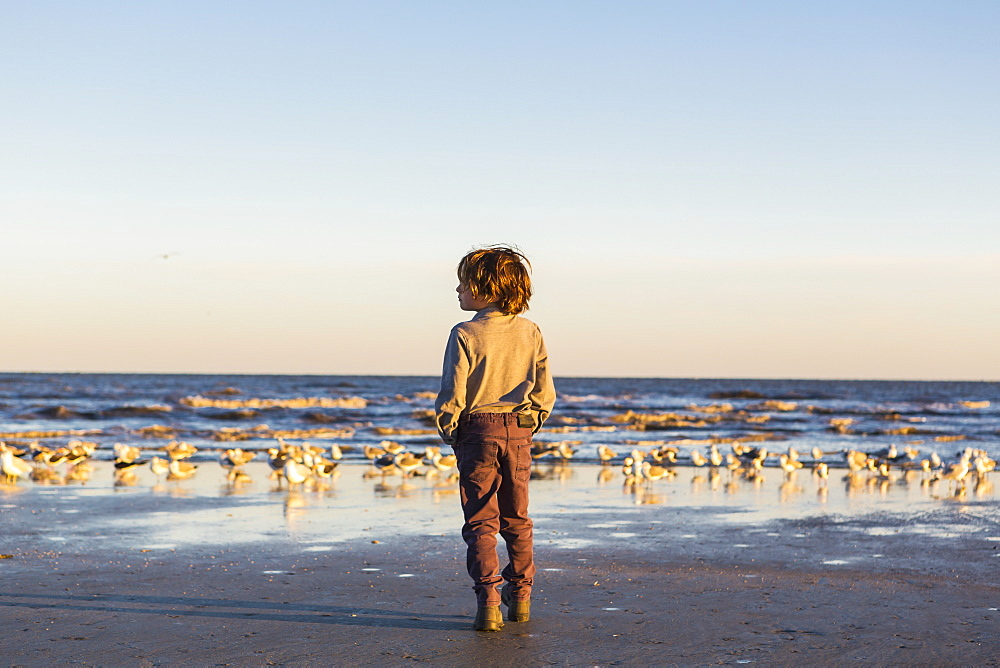 A boy walking on a beach hands in pockets, flock of seagulls on the sand, St Simon's Island, Georgia, United States