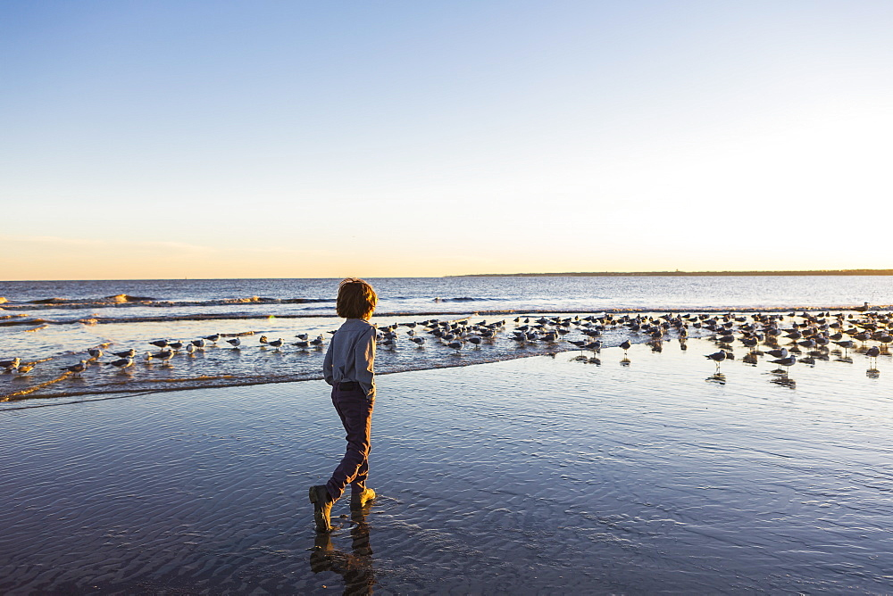 A young boy and a flock of seagulls on a beach, St Simon's Island, Georgia, United States