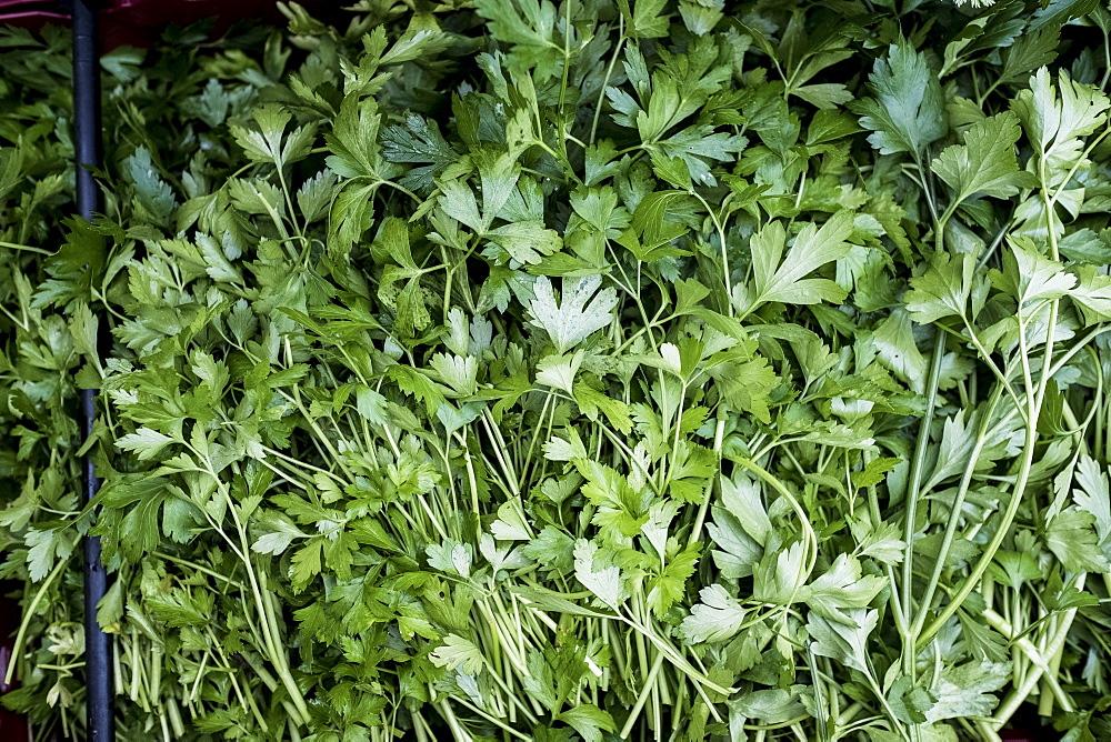 High angle close up of fresh Italian parsley, United Kingdom - 1174-7837