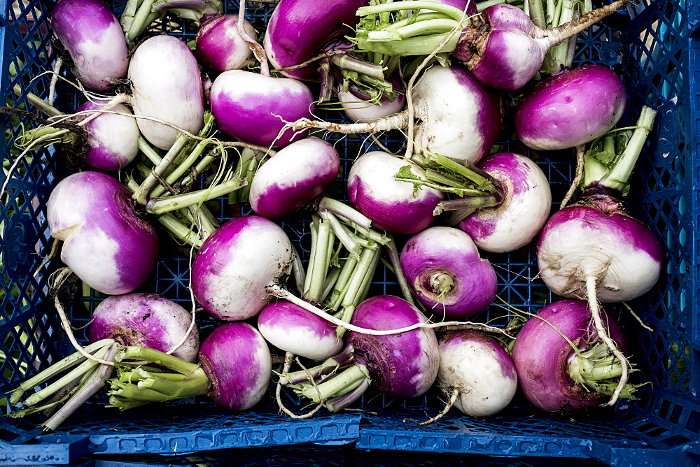 High angle close up of a crate with freshly picked white and purple turnips, United Kingdom - 1174-7838
