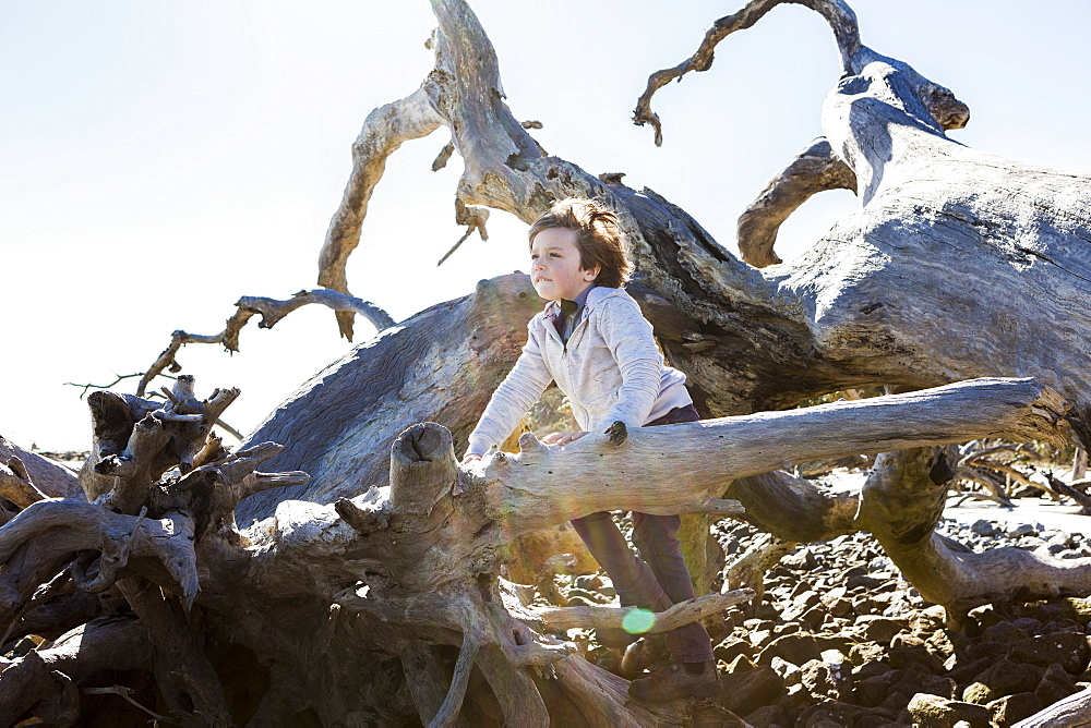 Six year old boy climbing on massive driftwood tree trunks lying in ocean water