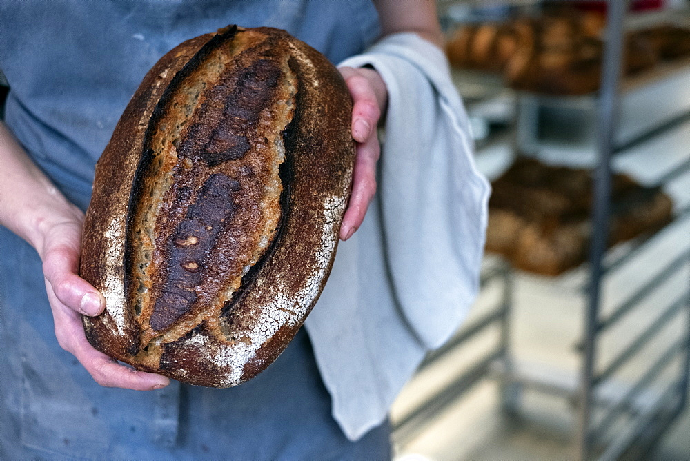 High angle close up of person holding freshly baked loaf of bread in an artisan bakery.
