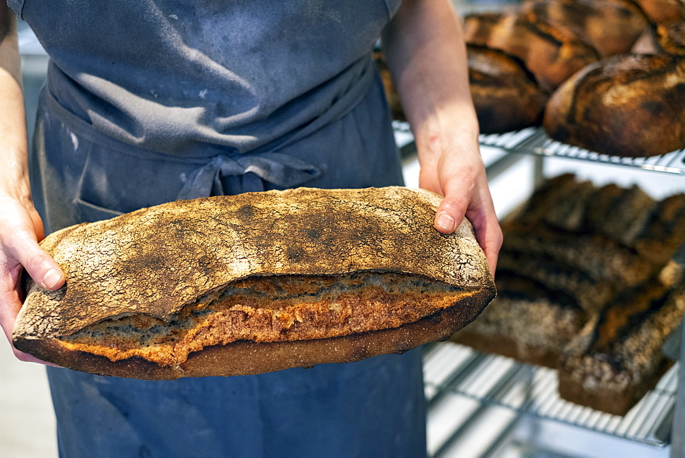 High angle close up of person holding freshly baked loaf of bread in an artisan bakery. - 1174-8002