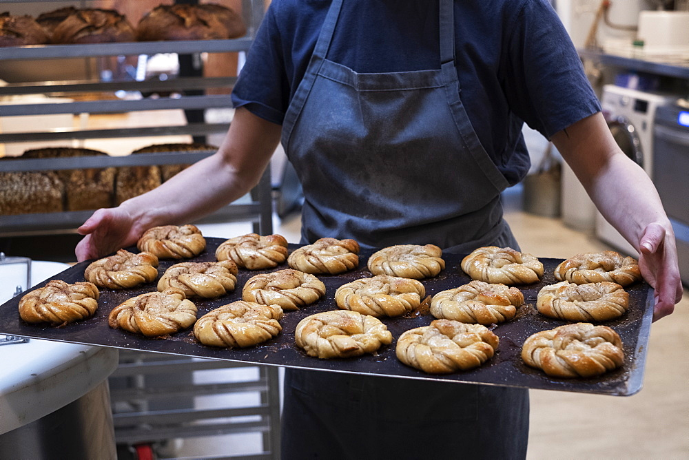 Close up of person holding tray with freshly baked cinnamon buns in an artisan bakery. - 1174-8003