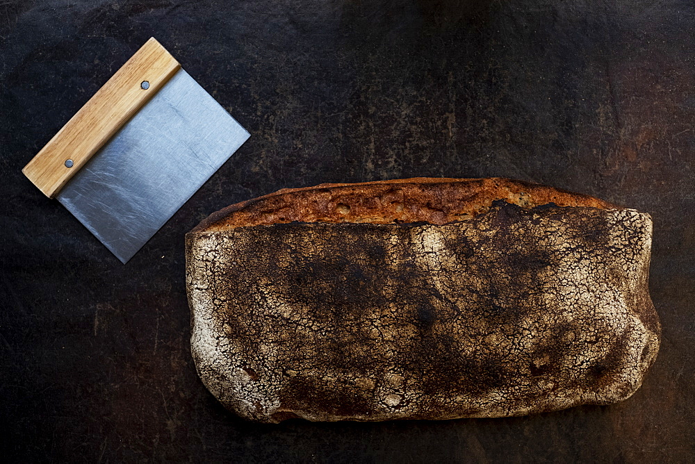 Close up of freshly baked loaf of bread in an artisan bakery. - 1174-8004