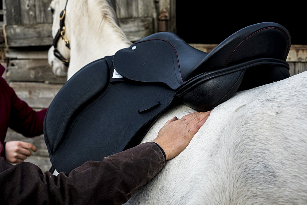 Close up of person putting black saddle on white horse, Berkshire, United Kingdom