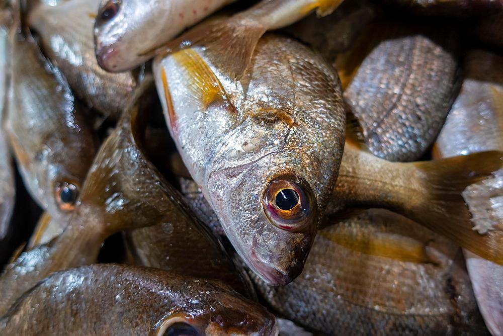 Fresh fish in market in The Algarve, Portugal