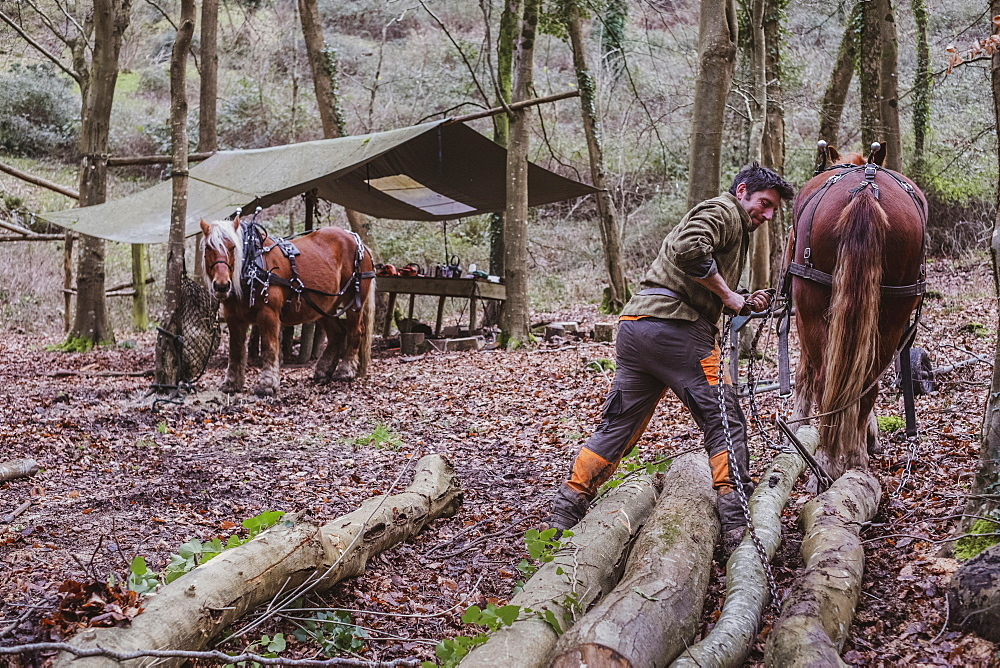 Logger and two work horses in a camp in a forest, Devon, United Kingdom - 1174-8235