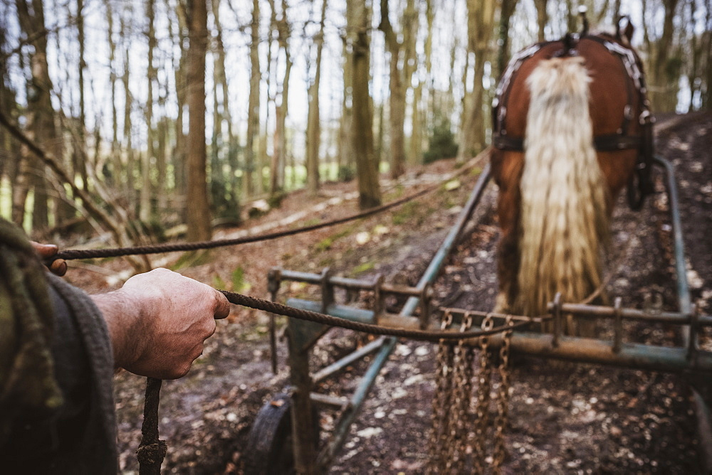 Logger driving work horse pulling a log forest, Devon, United Kingdom - 1174-8257