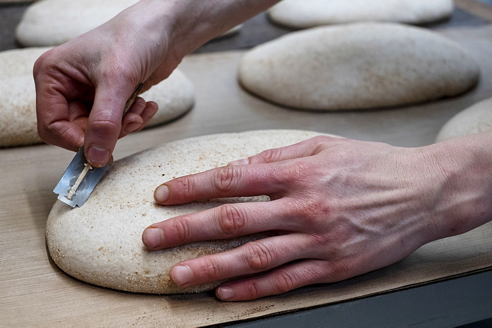 Artisan bakery making special sourdough bread, a baker using a blade to cut into the proving dough