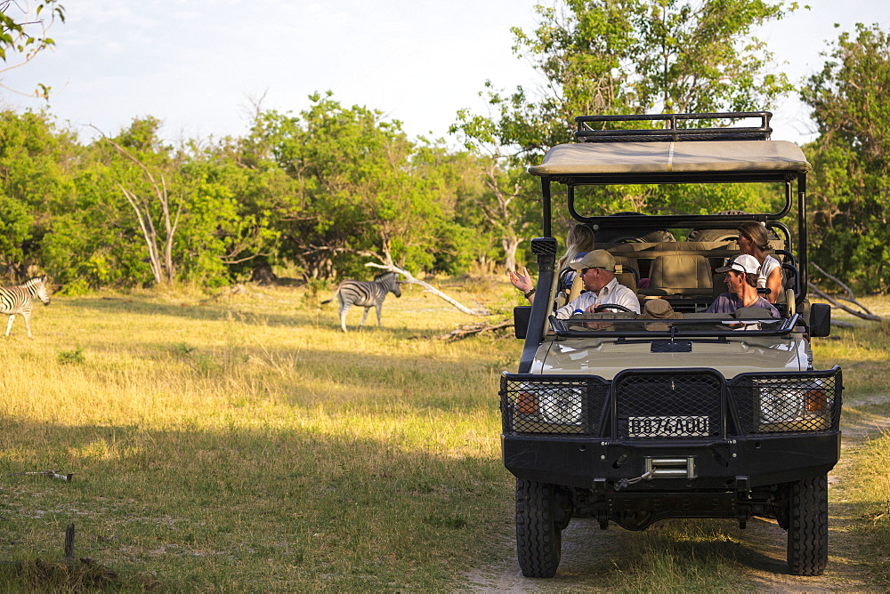 A family and guide in a safari jeep in a game reserve watching a couple of Burchell's Zebra, Moremi Game Reserve, Botswana