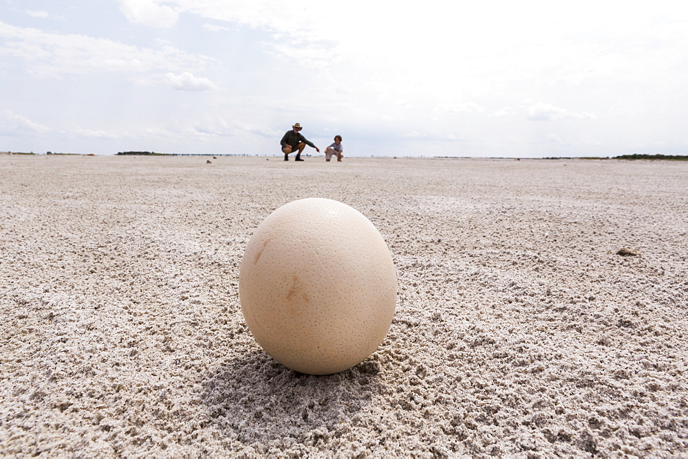 close up of ostrich egg, Nxai Pan, Botswana