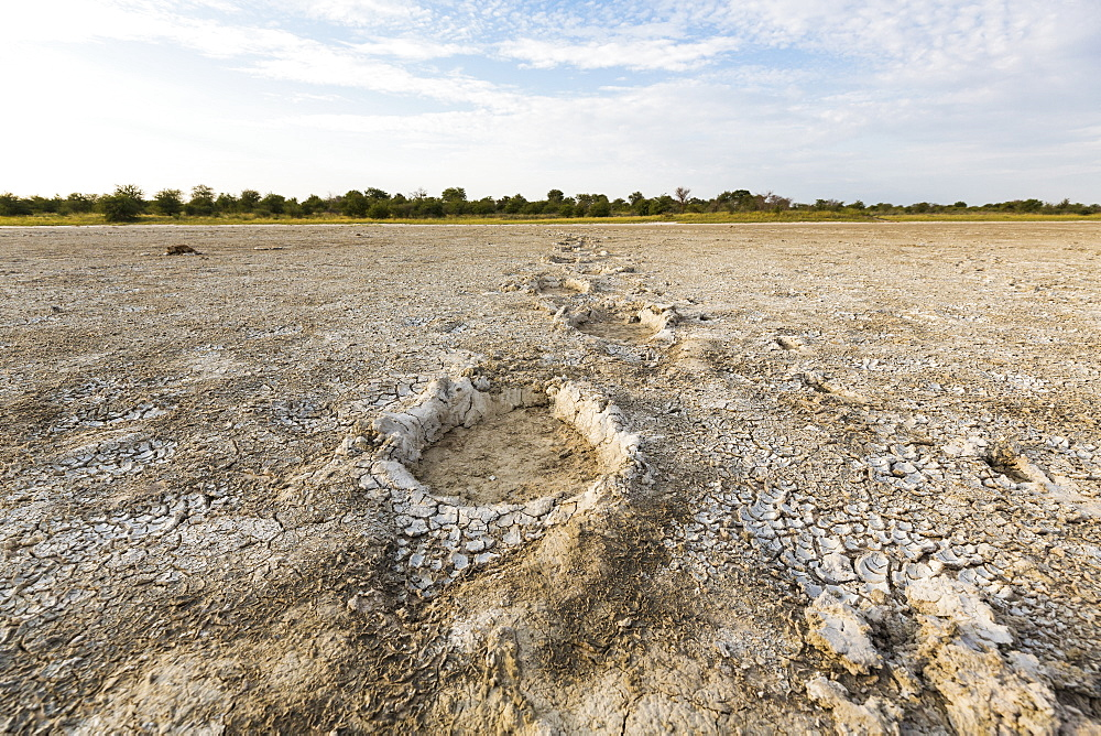elephant footprints, Nxai Pan, Botswana