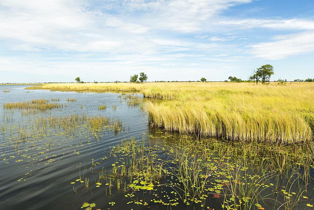 Reed-beds and waterways in the Okavango Delta, Botswana, Okavango Delta, Botswana