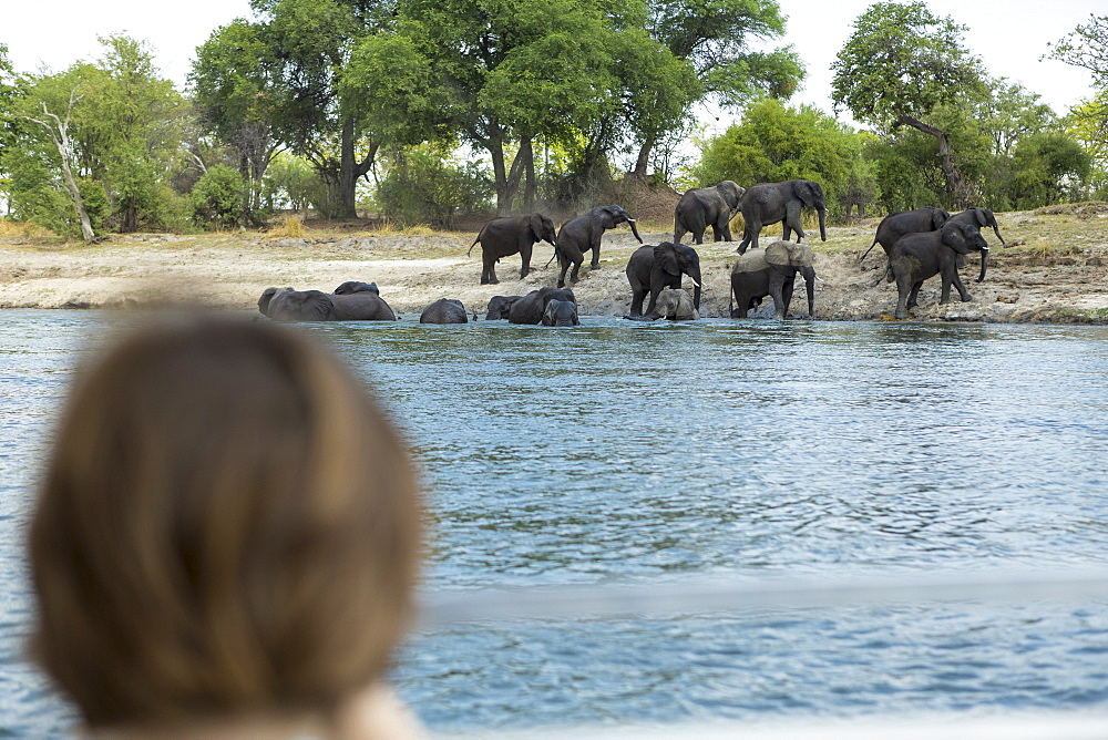 A boy watching a herd of elephant come down to a water hole, Botswana