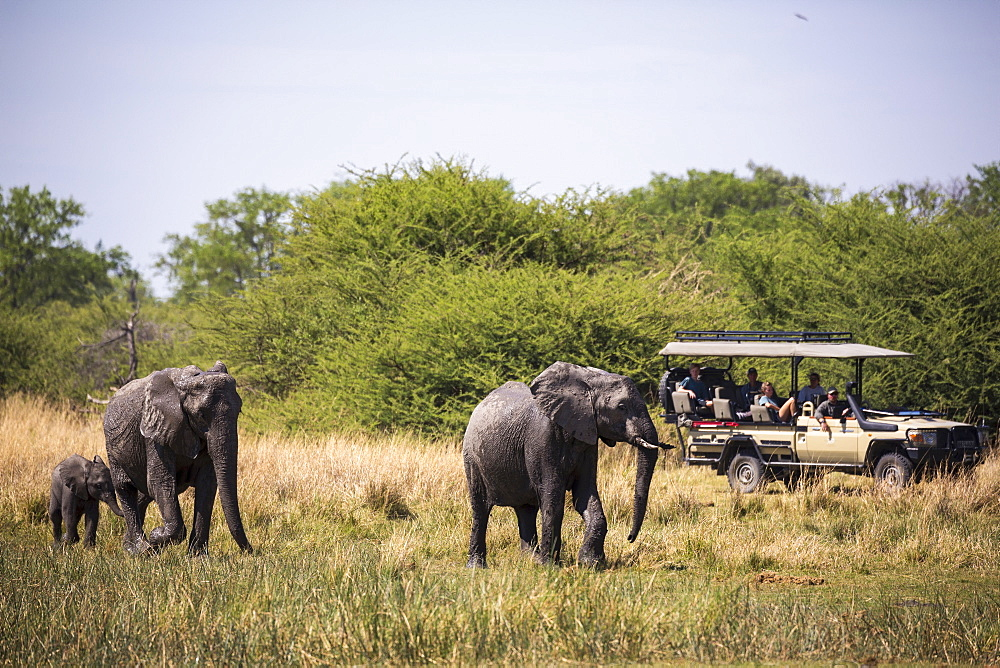 herd of elephants gathering at water hole, Moremi Game Reserve, Botswana