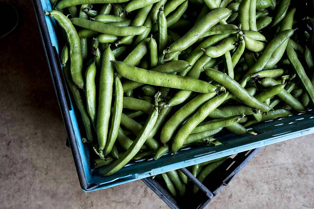 High angle close up of freshly picked green beans, Oxfordshire, United Kingdom - 1174-9846