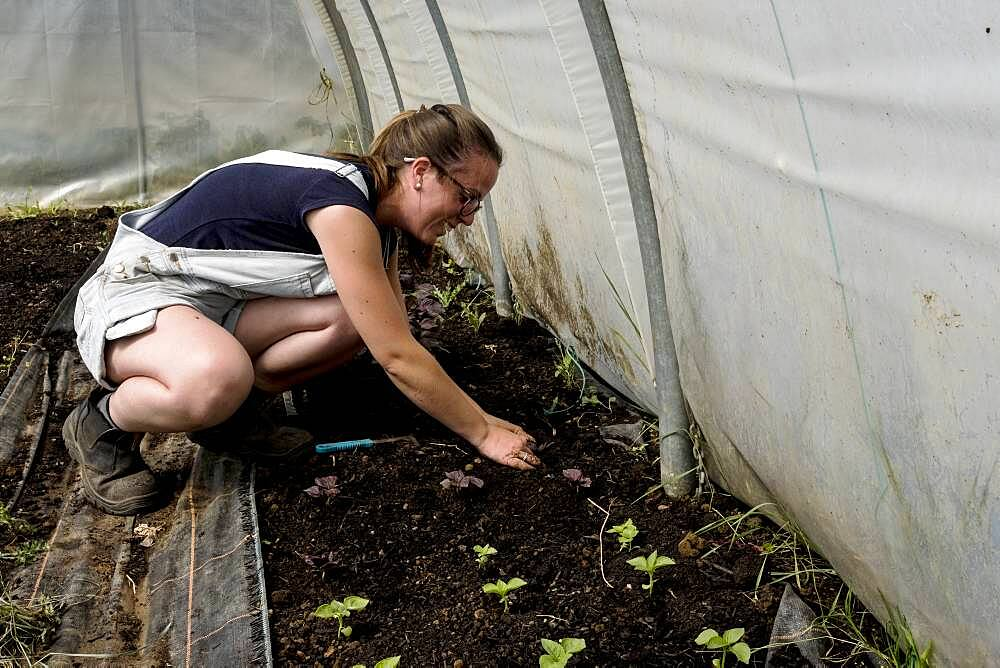 Woman kneeling in a poly tunnel, planting seedlings, Oxfordshire, United Kingdom - 1174-9864