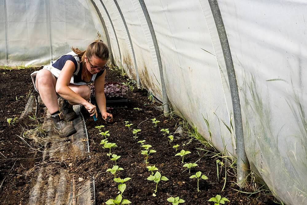 Woman kneeling in a poly tunnel, planting seedlings, Oxfordshire, United Kingdom - 1174-9865