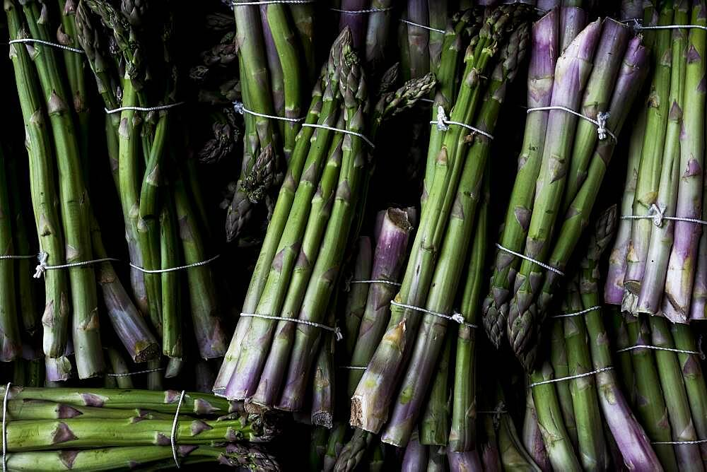 High angle close up of freshly picked bunches of green asparagus, Oxfordshire, United Kingdom - 1174-9871