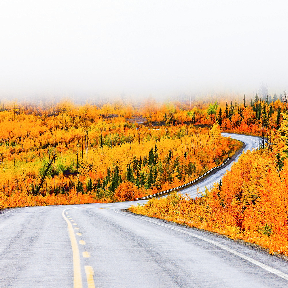 North Klondike Highway winding through autumn gold coloured boreal forest taiga countryside with low cloud cover, Yukon Territory, Canada.