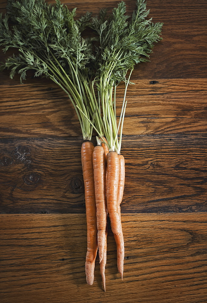 A small bunch of carrots with green leafy tops freshly harvested, lying on a tabletop, Woodstock, New York, USA