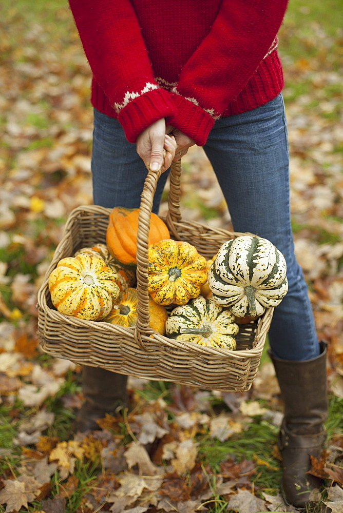 A woman in a red knitted jumper holding a basket of vegetables, gourds and squashes. Organic farming, Woodstock, New York, USA