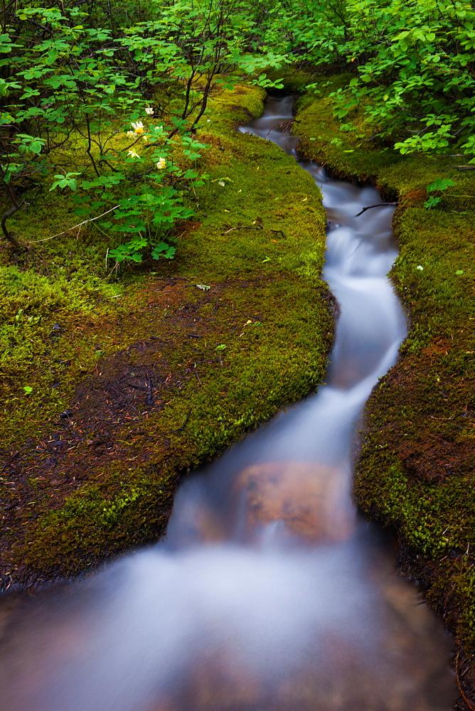 Alpine Stream, a time lapse effect, Jasper National Park, Alberta, Canada, Jasper National Park, Alberta, Canada