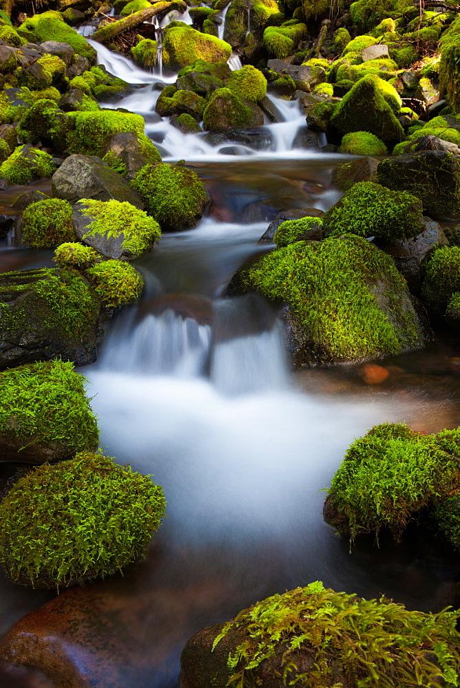 Rainforest stream, Olympic National Park, Washington, Olympic National Park, Washington, USA