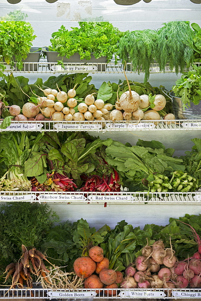 A farm stand with rows of freshly picked vegetables for sale, Hurley, New York, USA