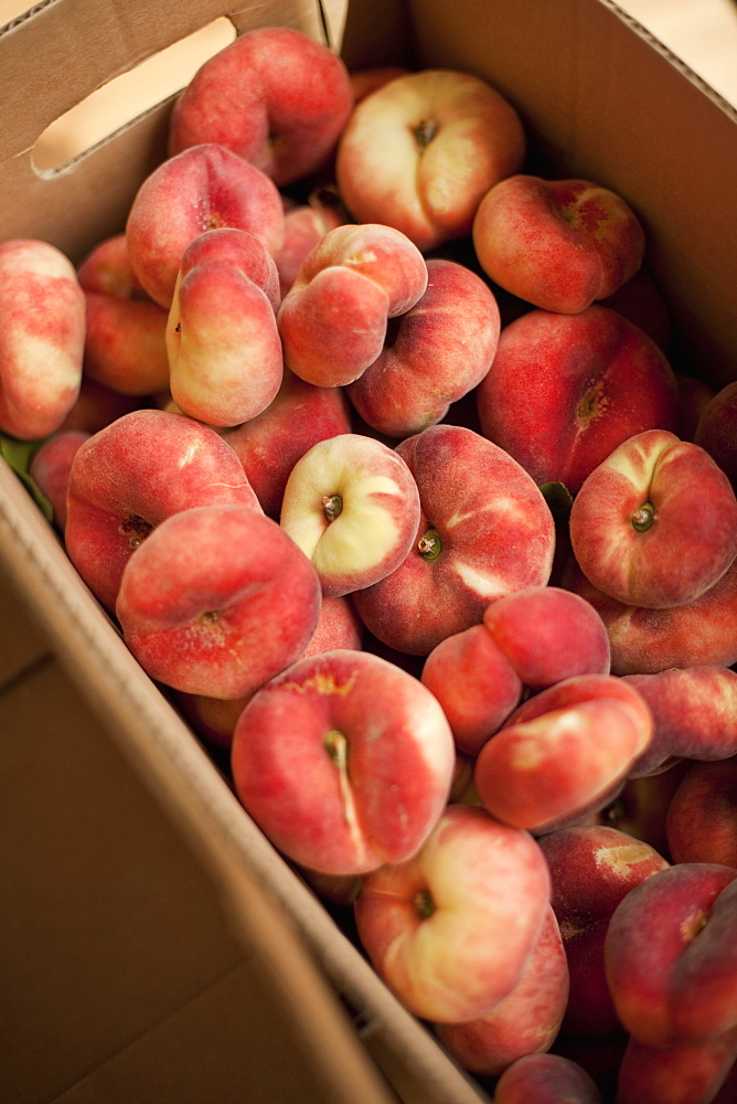 Fresh fruit on an organic farm stand. Doughnut peaches in a box, Salt Lake City, Utah, USA