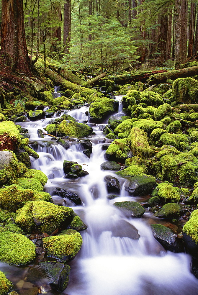 A stream flowing over moss covered rocks in the Olympic National Park, in Washington State, Washington, USA