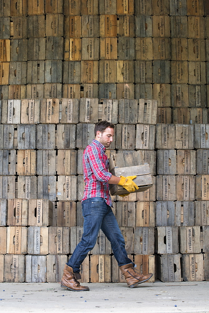 A farmyard. A stack of traditional wooden crates for packing fruit and vegetables. A man carrying an empty crate, Rhinebeck, New York, USA