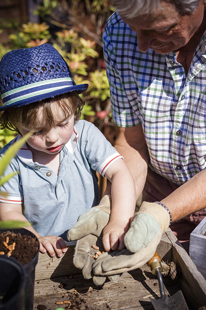 Man and a young child gardening, planting seeds, England