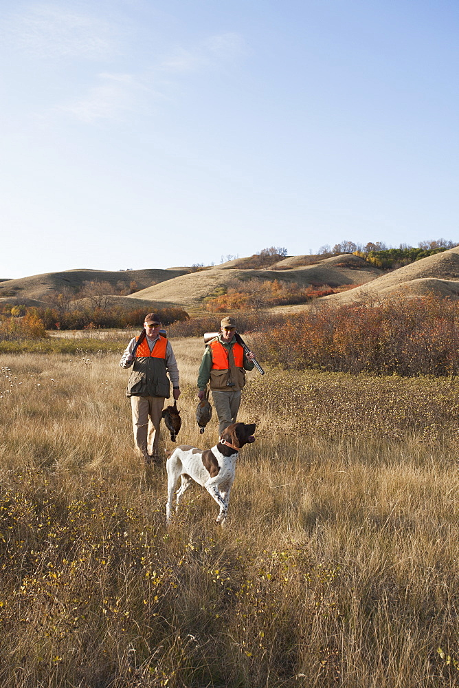 Two men, bird hunters, with shotguns, carrying the day's bag of dead birds, and a spaniel dog, Saskatchewan, Canada