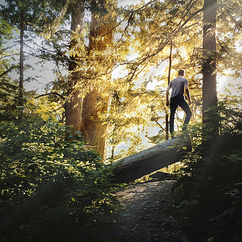 Rear view of a man standing on a tree log in a forest.