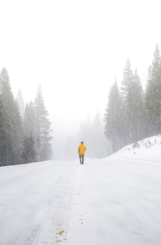 Man walking along a snow covered road in a winter forest.