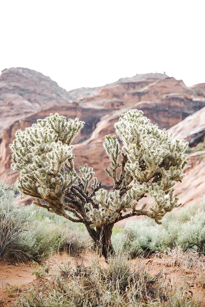 Mountain landscape, sandstone rocks, dry desert and scrub plants. A cactus, United States of America