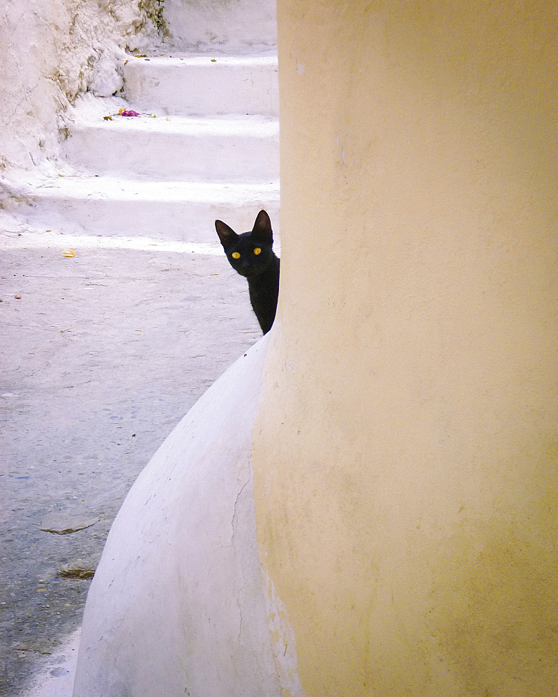 Black cat with yellow eyes peeking out from behind a column, United States of America