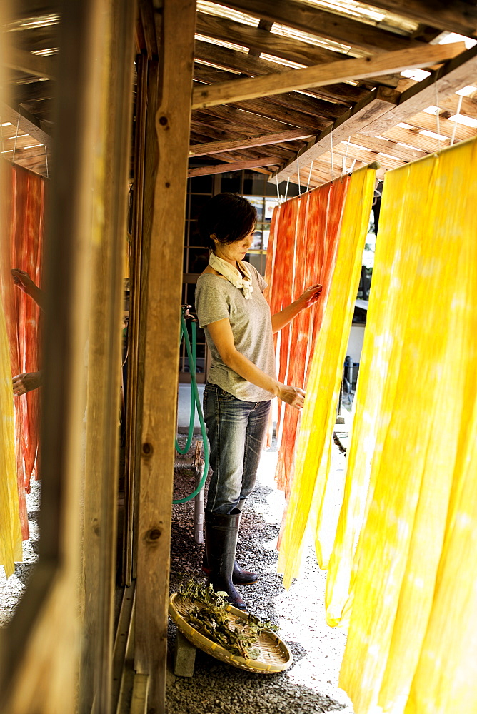Japanese woman standing outside a textile plant dye workshop, hanging up freshly dyed bright yellow and orange fabric, Kyushu, Japan