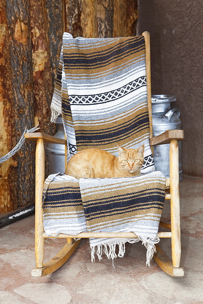 Cat on a Wooden Rocking Chair, Entrada, Colorado, United States of America - 1174-5269