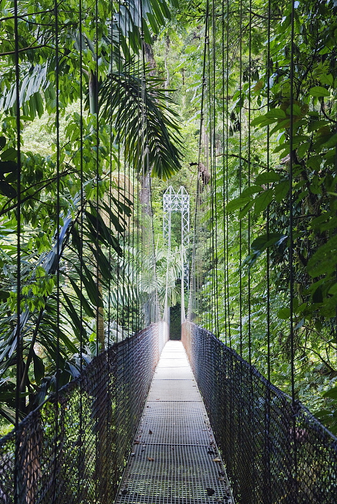 Footbridge in Costa Rican Forest, Arenal, Costa Rica