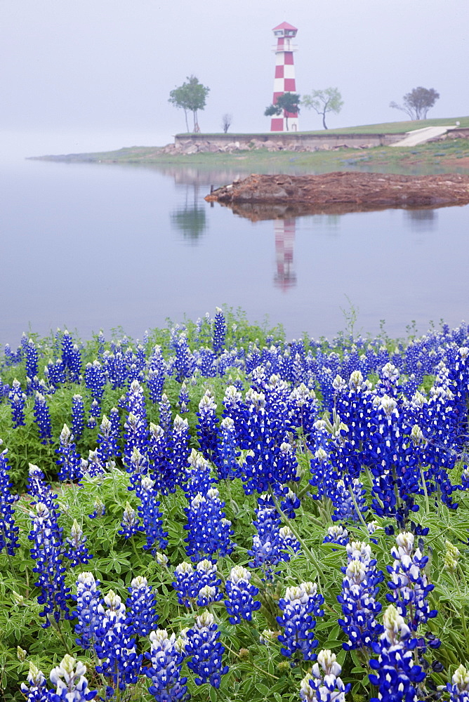 Blue Bonnets on a Beach with Lighthouse, Texas, USA