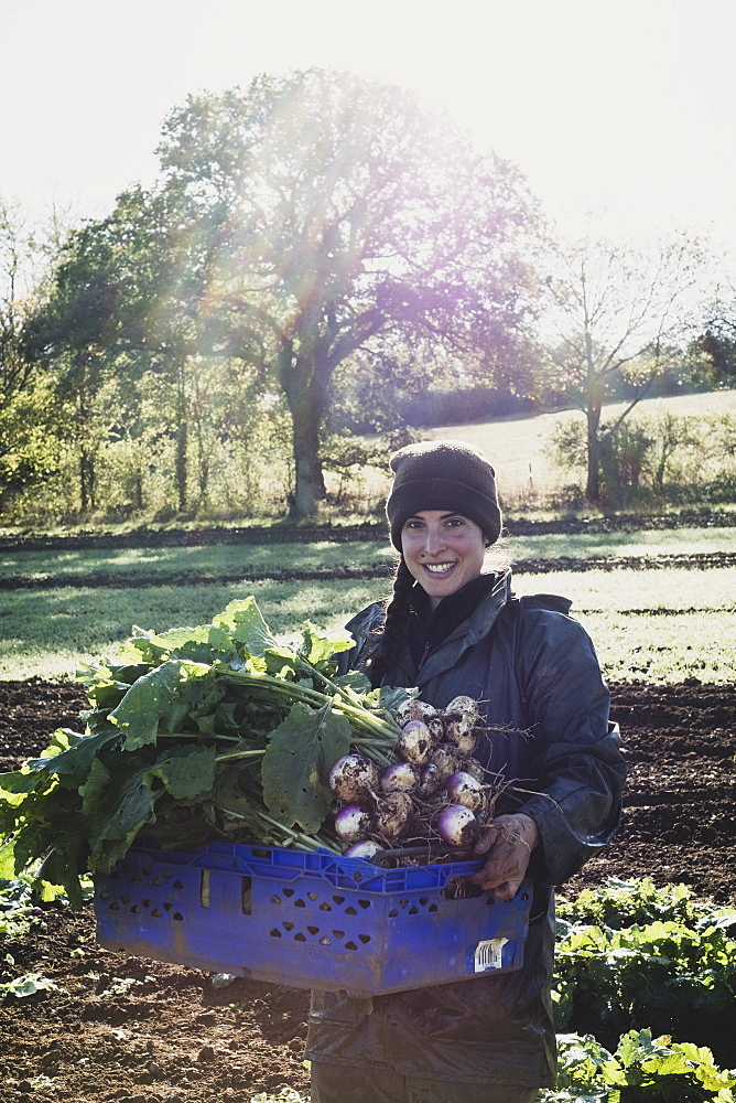 Smiling woman standing in field, holding blue crate with freshly harvested turnips, looking at camera, Oxfordshire, England