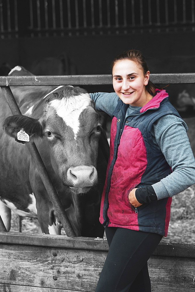 Young woman standing next to Guernsey cow on a farm, Oxfordshire, England - 1174-5784B