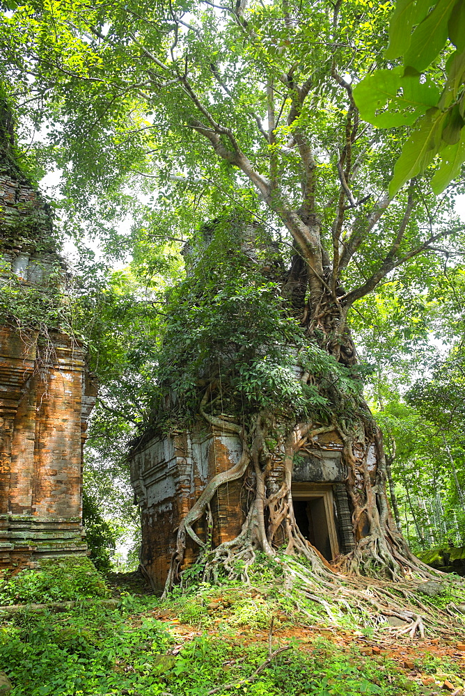 Tree roots growing on Prasat Pram Temple, Koh Ker, Preah Vihear, Cambodia