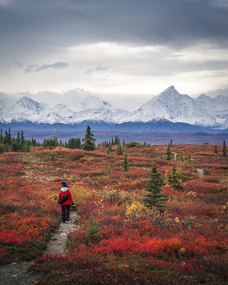 Asian woman hiking near mountains, Denali, Alaska, USA