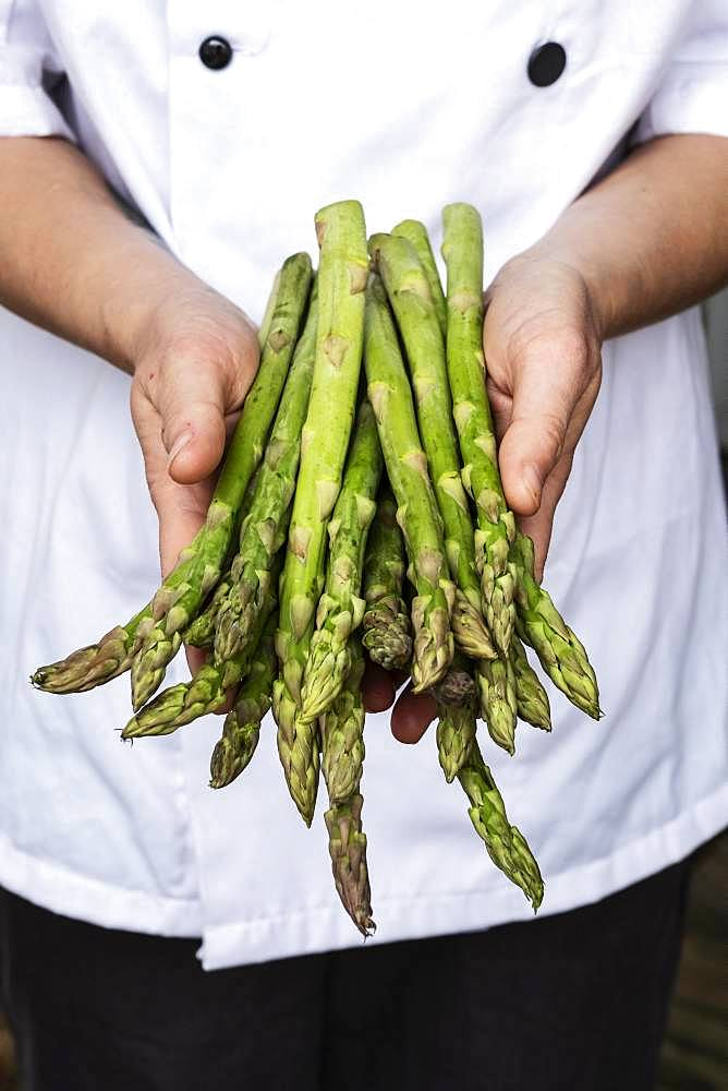 Close up of chef holding a bunch of green asparagus