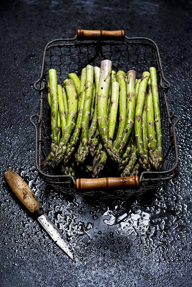 High angle view of freshly picked green asparagus in metal basket