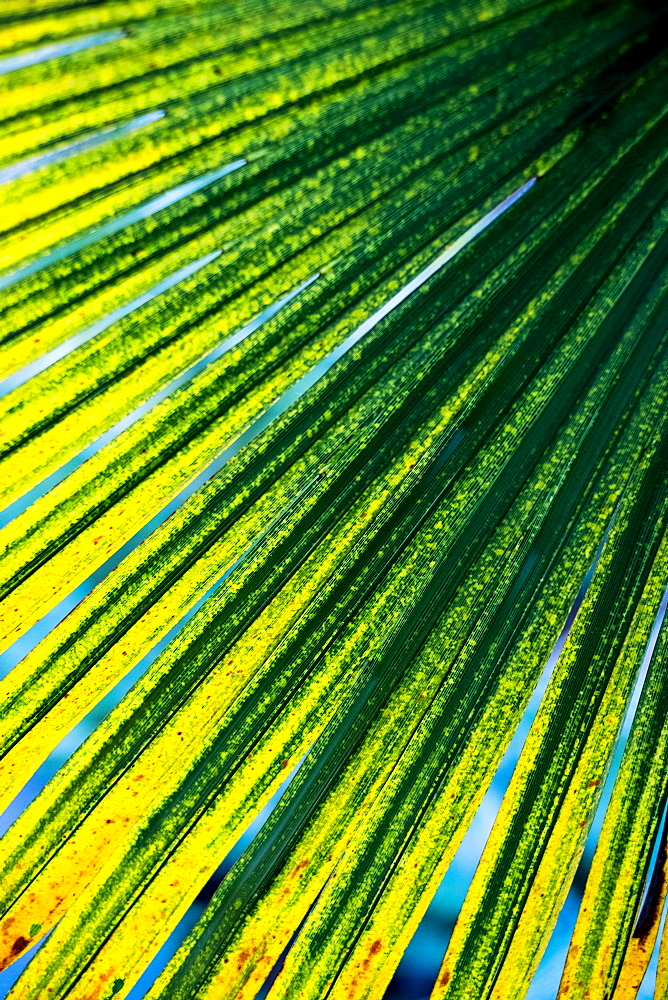 Close up of sunlight filtering through fronds of a palm tree